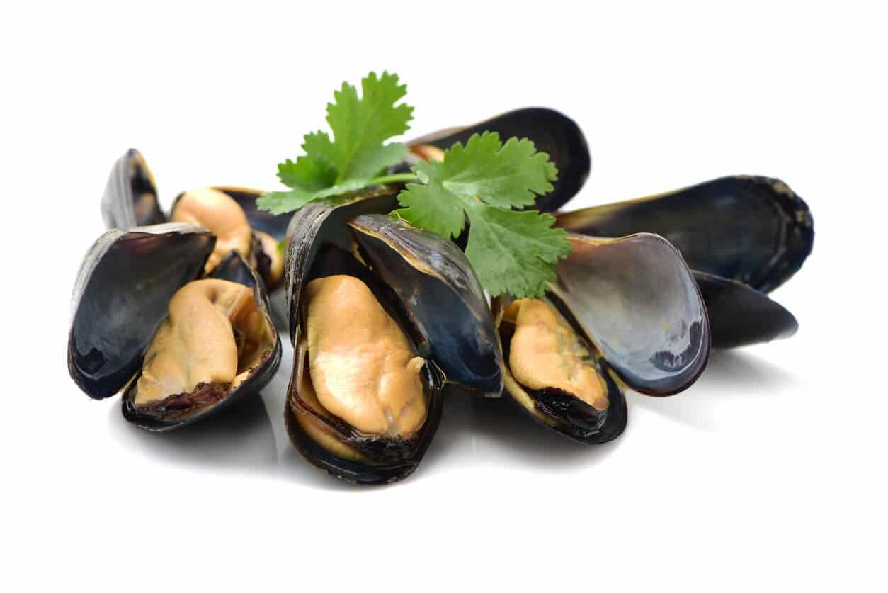 Marisco é fonte de vitamina B12